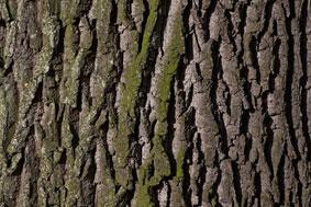 Grundsatzbeschluss für mehr Straßenbäume