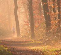 Halbmarathonstrecke für Erlangen